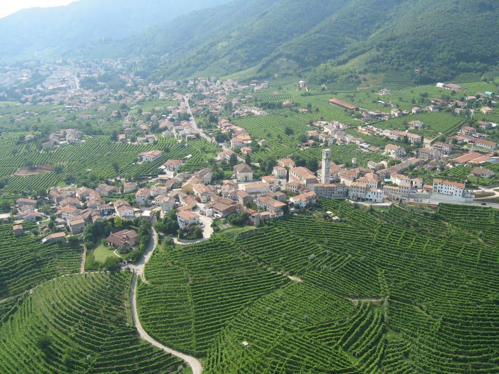 De wijnranken bedekken het landschap (Foto: Panoramio)