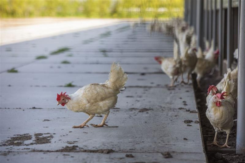 Kippenboeren moeten uitstoot fijnstof halveren