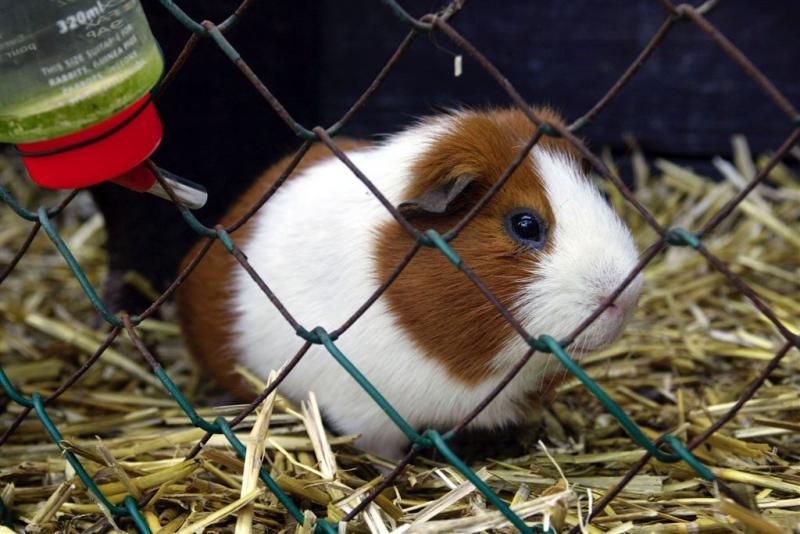 Meisje (10) doodt dieren op kinderdagverblijf