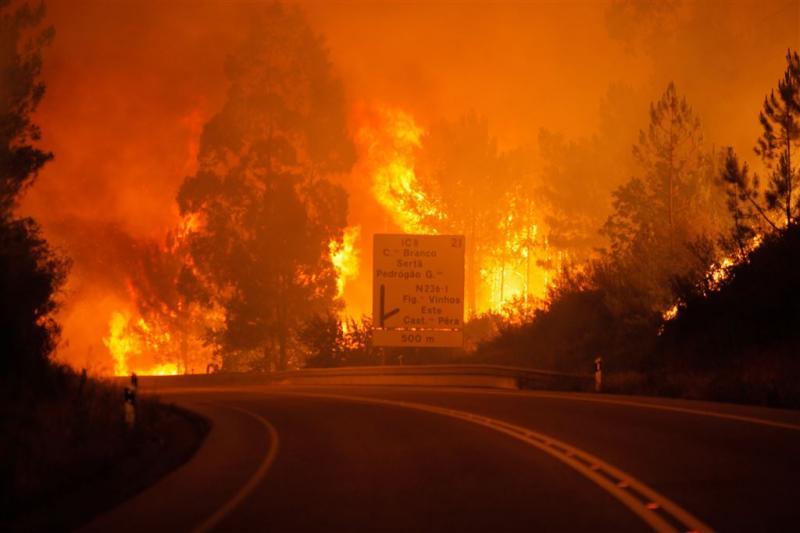 Zeker 19 doden bij bosbrand Portugal
