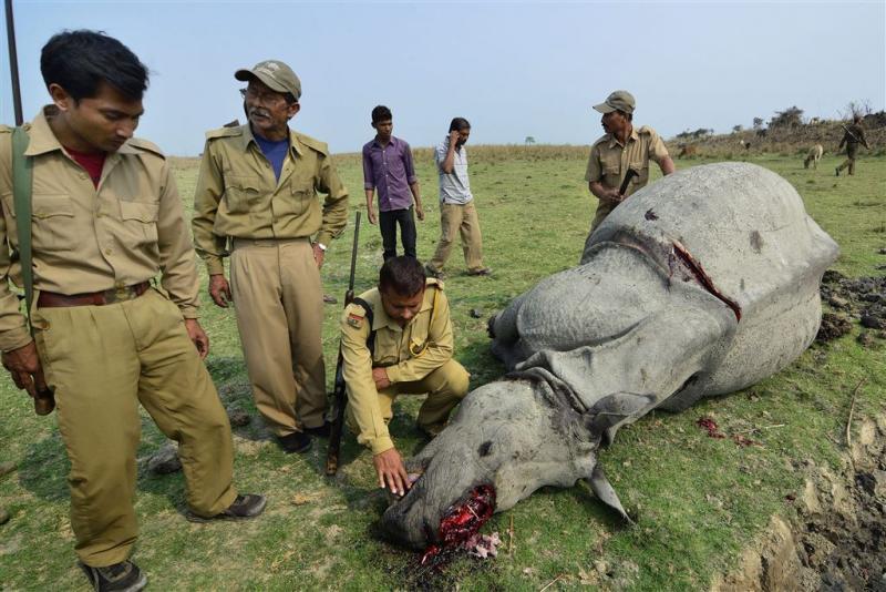 Hollandse ivoorhond jaagt op stropers in Mali