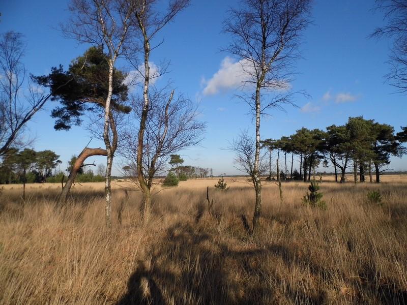 Kalmthoutse Heide (Foto: qltel)