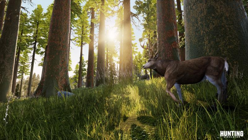 Hunting Simulator - Forest (Foto: Bigben )