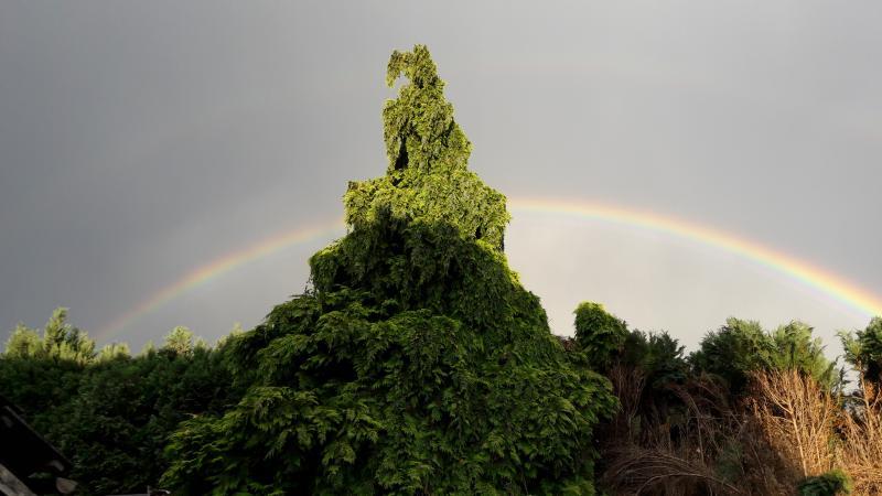 Charged zag deze regenboog in zijn achtertuin.  (Foto: Charged)