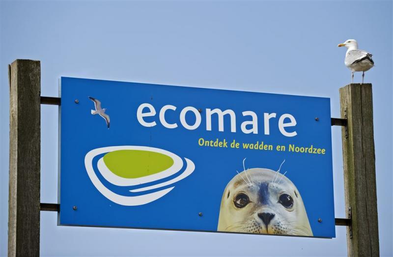 Papegaaiduiker duikt op in Egmond aan Zee