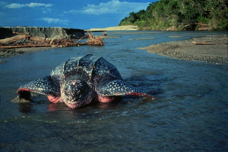Schildpadden hinderen vliegverkeer New York