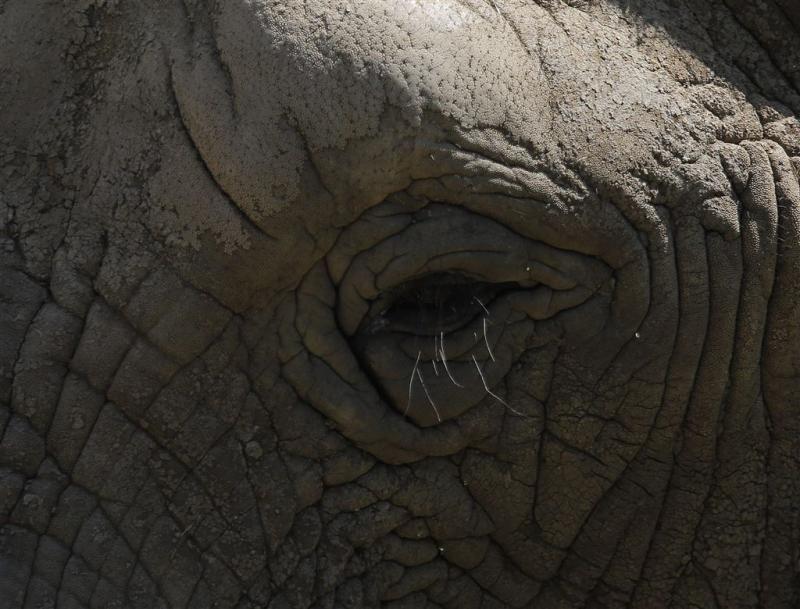 EU-miljoenen voor olifanten en boomsoorten
