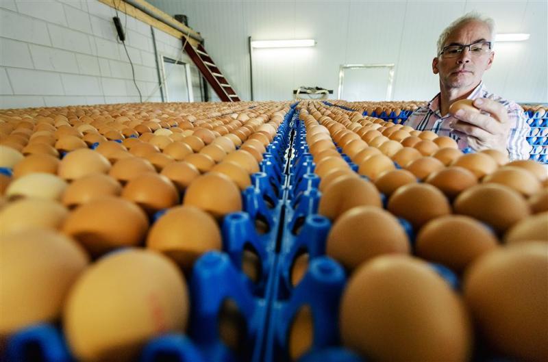 Ministerie: eierproblemen zijn bedrijfsrisico