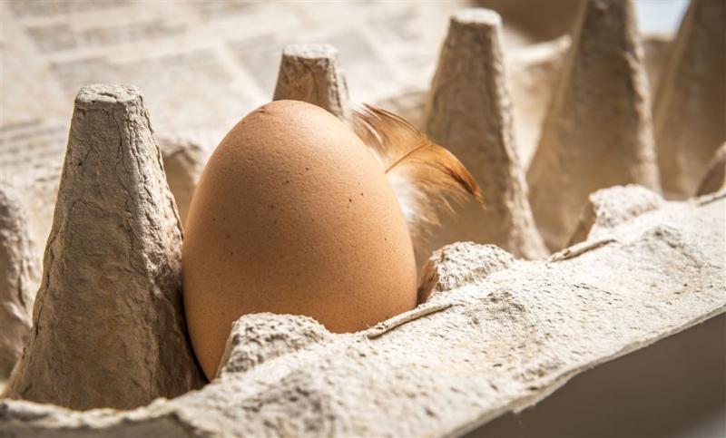 Protest tegen doden besmette kippen