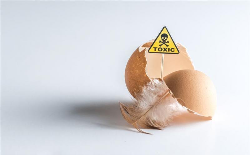 België: Nederlandse eieren al eind 2016 besmet