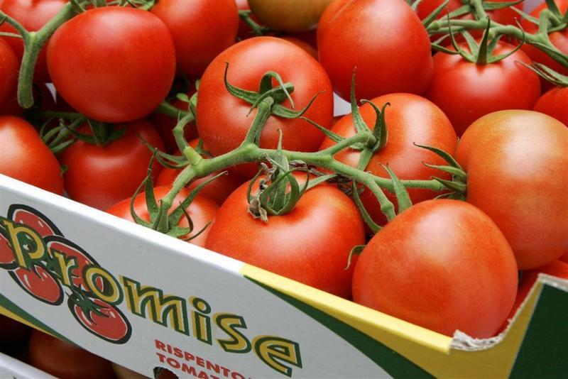 Trostomaat meest geteelde groente onder glas