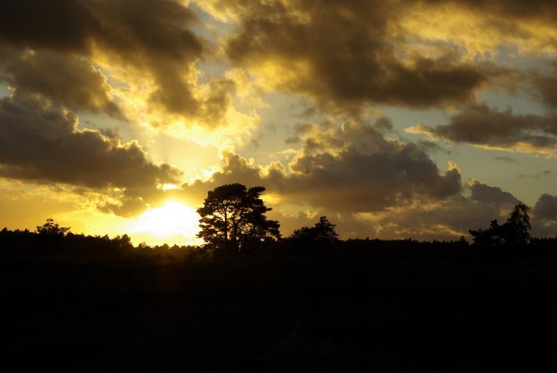 Mooie zonsopkomst (Foto: Disbatch)