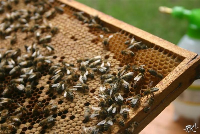 Bijen zorgen voor de kers op de taart - help ze een handje