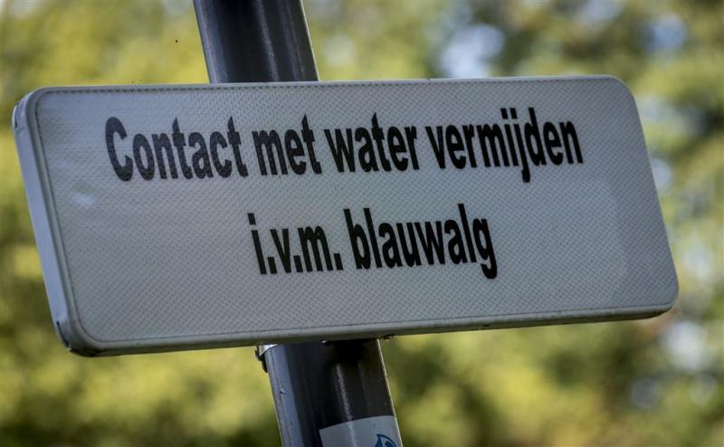 Blauwalg in verlaten tracé Zuid-Willemsvaart