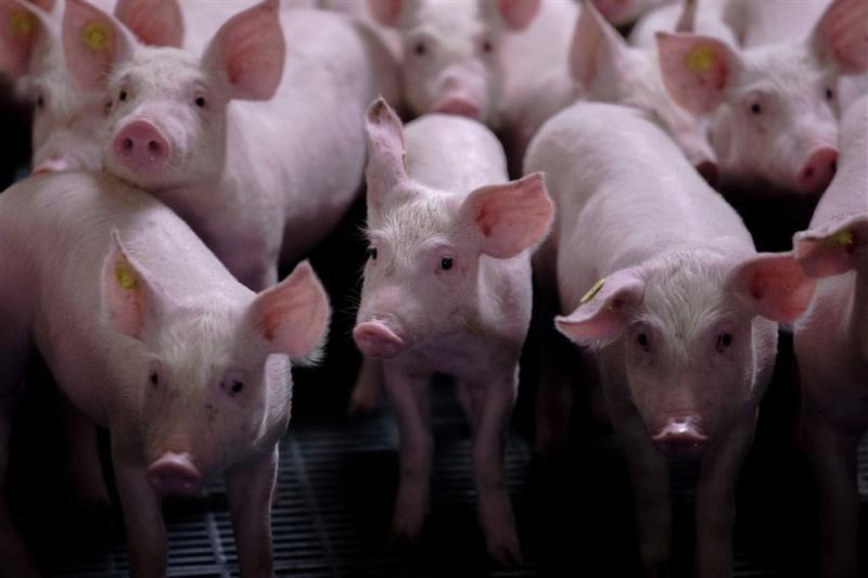 Geld voor stoppende varkensboeren