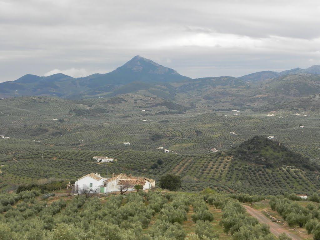 Genoeg olijven voor vandaag (Foto: Panoramio)