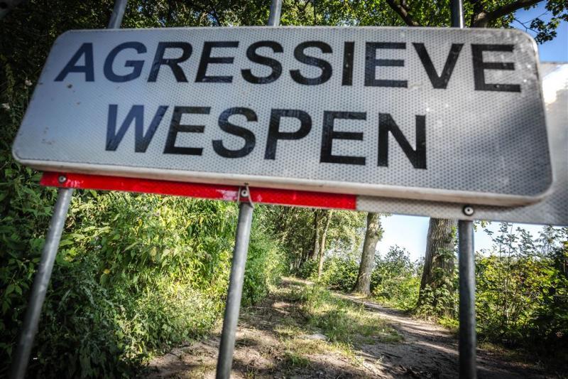 Wespen vallen wandelaars aan in Eindhoven