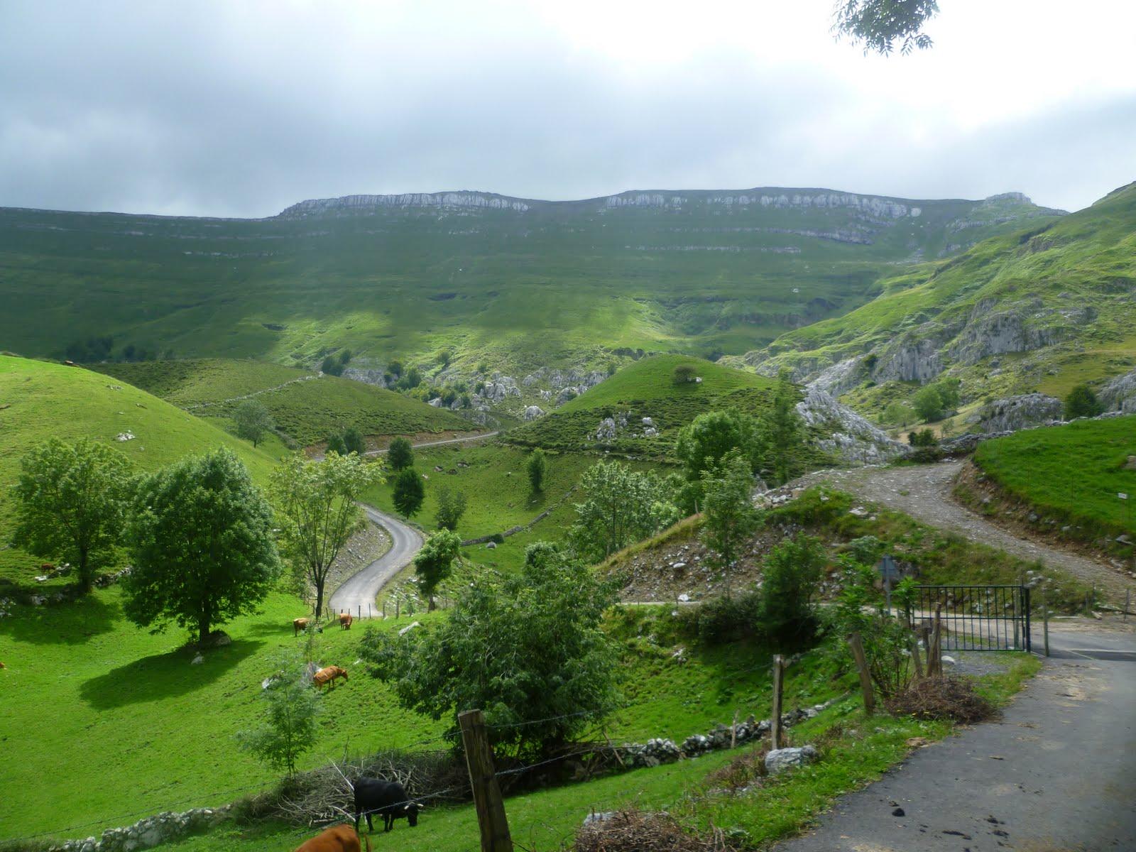Genoeg gras voor de koeien (Foto: Panoramio)