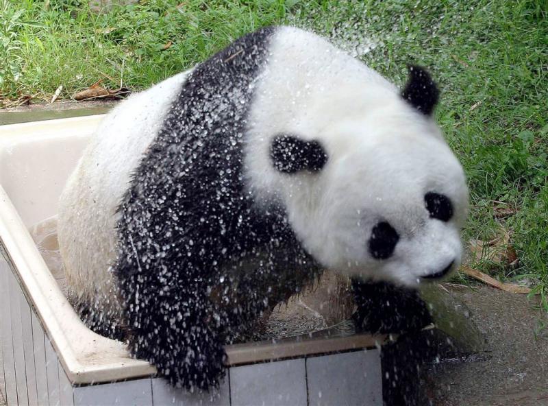 Hoogbejaarde panda (37) overleden in China