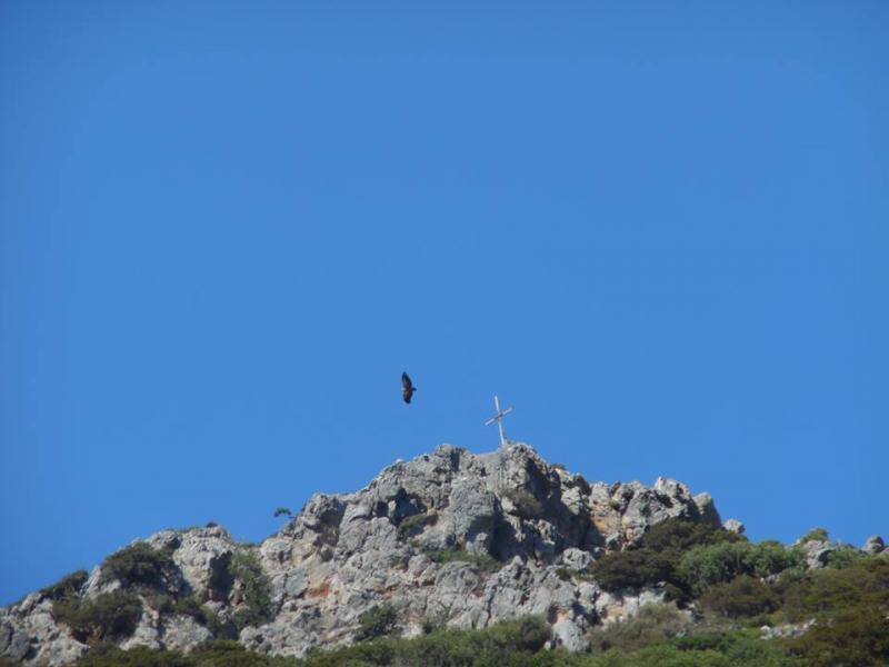 Een aasgier in Griekenland  (Foto: Papabear)