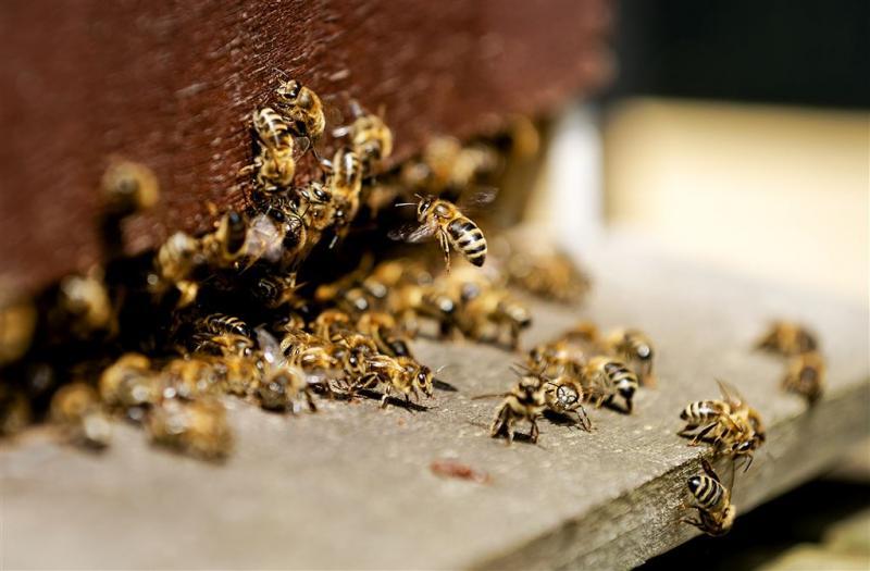 Bijen in Drenthe geruimd om ziekte