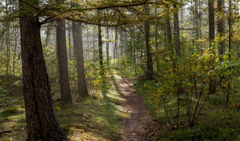 Steeds minder bos in Nederland