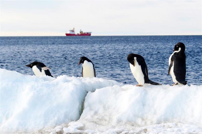 Weer grote ijsberg op drift