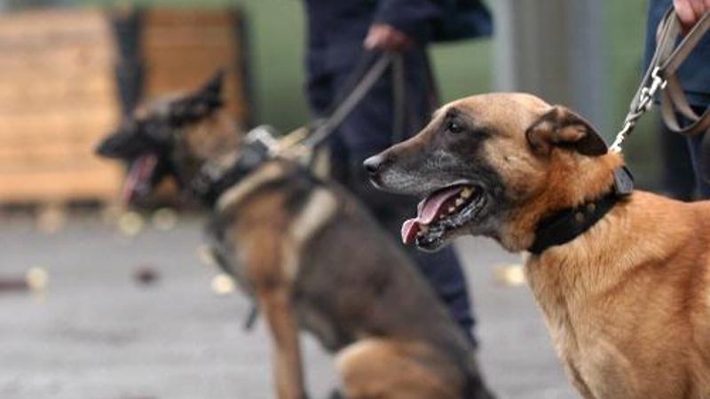 Politiehond haalt kemphanen uit elkaar  (Foto: Politie.nl)