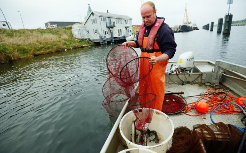 Rijkswaterstaat onderzoekt migratiegedrag schieraal (Foto: Ben Griffioen, Wageningen Marine Research)