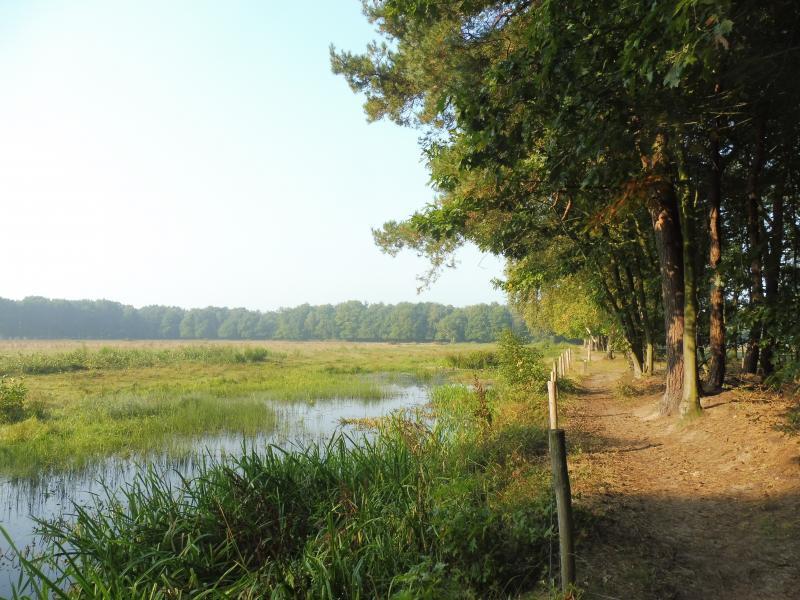 Foto gemaakt tijdens een wandeling in Oost-Brabant (Foto: qltel)