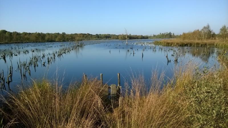 Afgelopen zondag tijdens een wandeling in oost-Brabant (Foto: qltel)