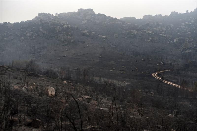 2016 was rampjaar voor de bossen