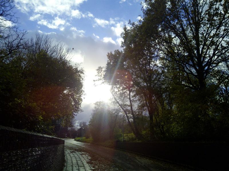 Zon door de bomen (Foto: DJMO)