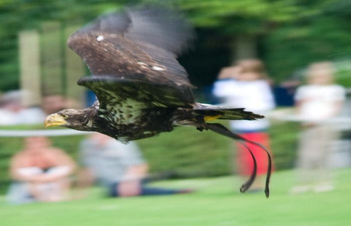 Vogelshow (Foto: qltel)