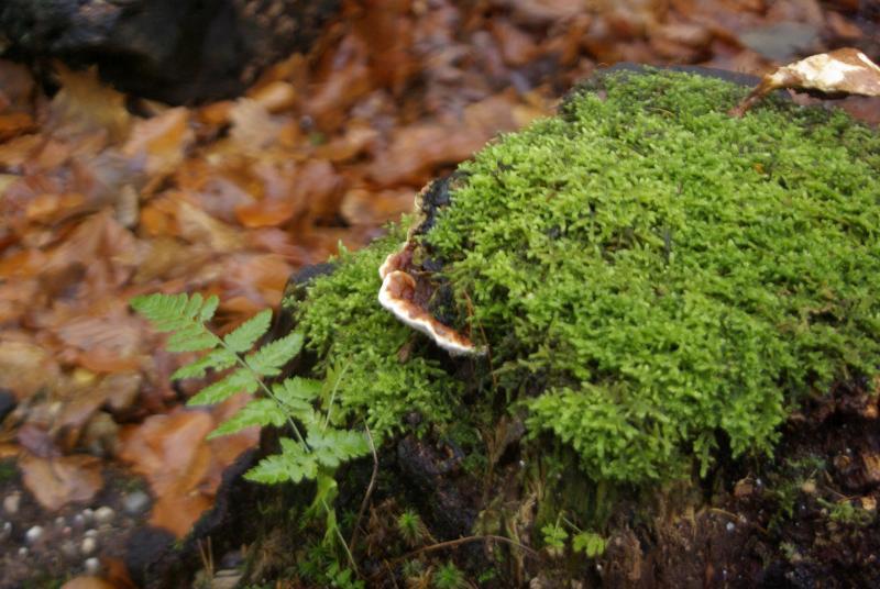 Mos en paddenstoel  (Foto: Disbatch)
