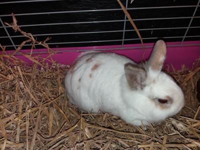 Politie zoekt konijn-dumper (Foto: Politie.nl)