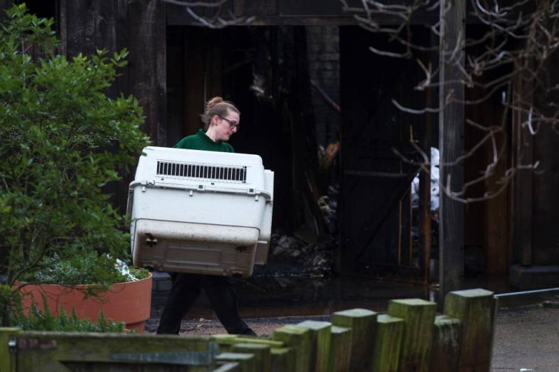 Zoo Londen voorlopig dicht wegens brand