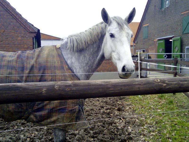 DJMO kwam gisteren een paard tegen! (Foto: DJMO)