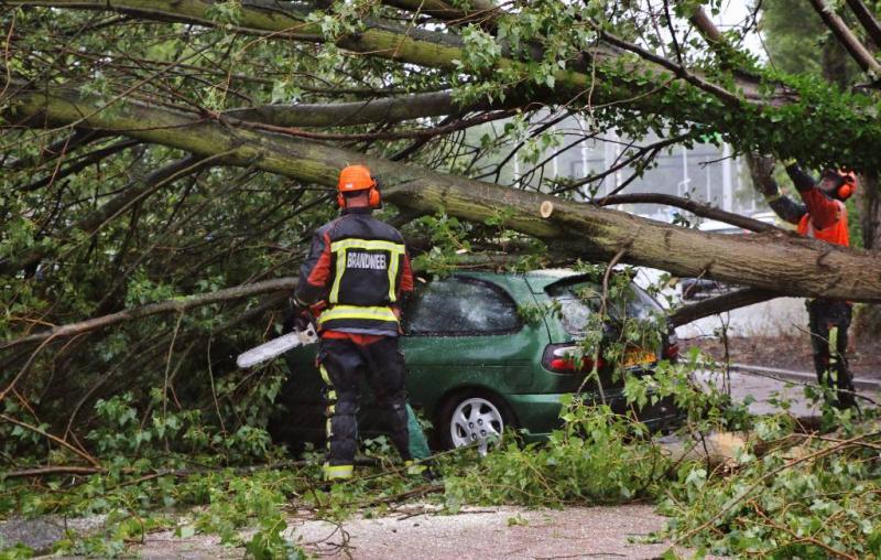Vrouw dood door boom op auto in België