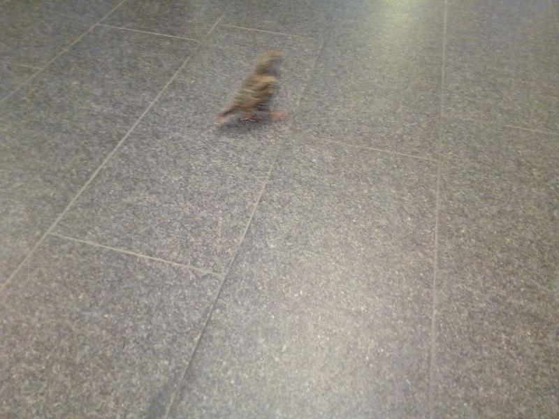 Vogeltje in het station (Foto: DJMO)