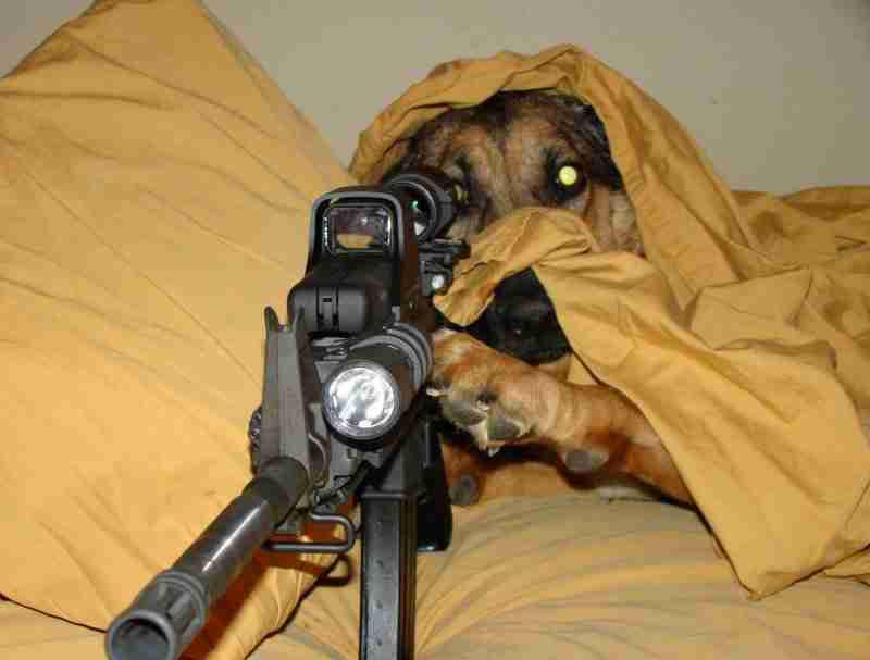 Hond met geweer...