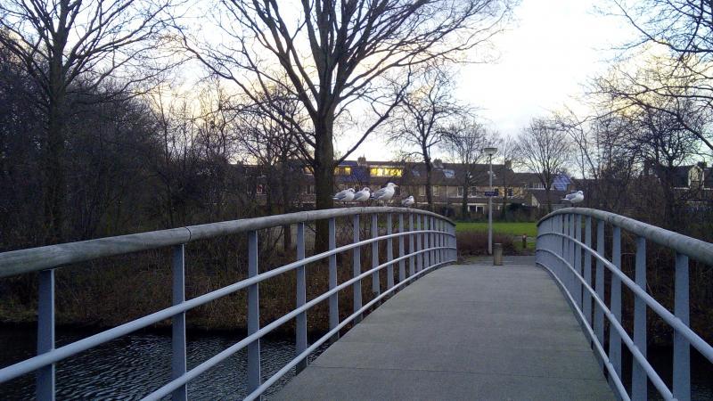 Meeuwen op een brug  (Foto: DJMO )