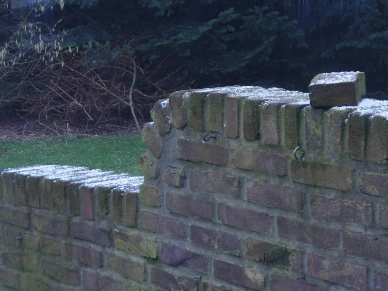 Besneeuwd muurtje (Foto: qltel)