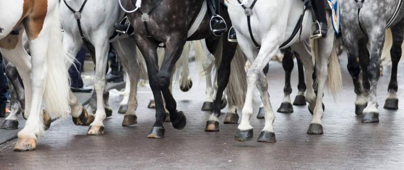 Ontsnapte paarden rennen over Britse snelweg