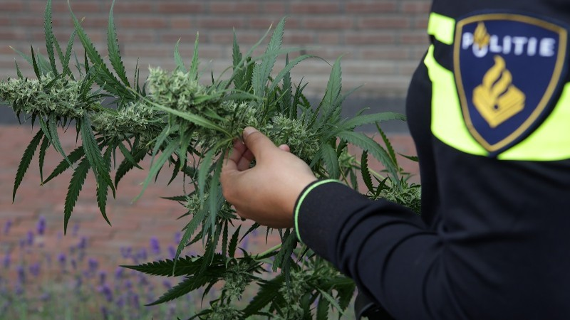 14 arrestaties bij inval hennepkwekerij (Foto: stockfoto politie.nl)