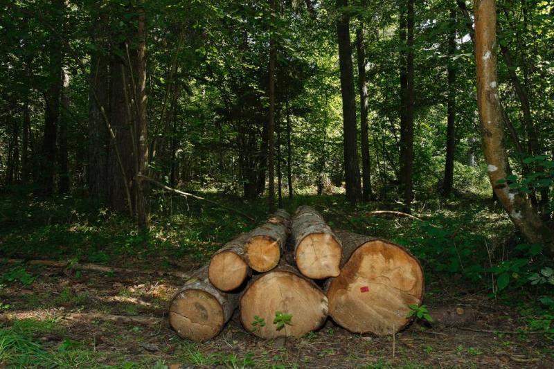 'Polen moet stoppen met kappen oerbos'