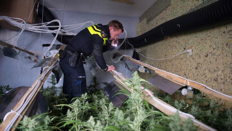330.000 euro aan hennep vernietigd (foto: Stockfoto politie.nl)