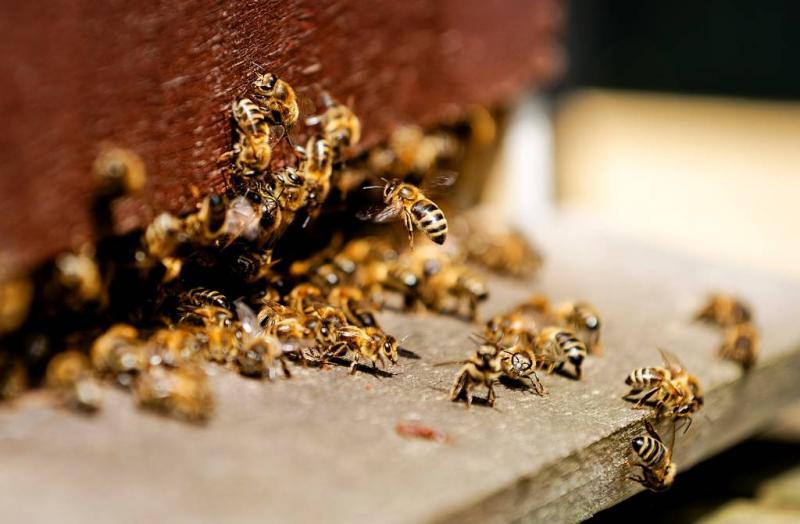Pesticiden bedreigend voor bijen