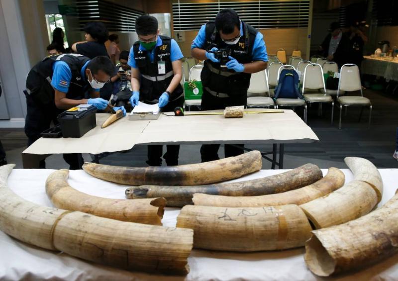 VS opent deur voor olifantenjager