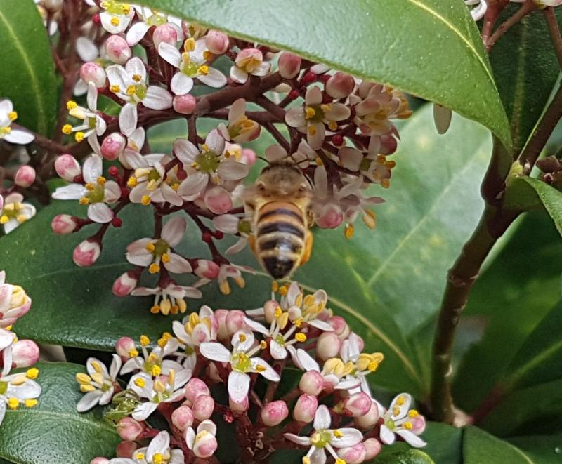 Bondage bekeek een bij op een bloem (Foto: Bondage)